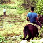 PALESTINA: Battir, Beit Jala, Cremisan, ansia per la sentenza sul Muro