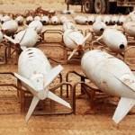 IRAQ. L'Isil si prende le armi chimiche di Saddam