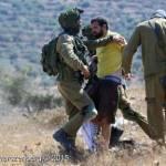 PALESTINA. Vittorio Fera scarcerato, in tribunale l'8 settembre