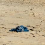 MIGRANTI. Niger, in 34 muoiono di sete nel deserto