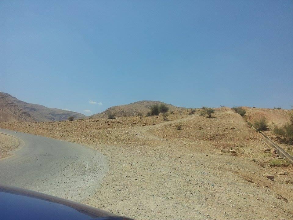 Area desertica di al-Auja. Alberi sopravvissuti. (Foto: Patrizia Cecconi)