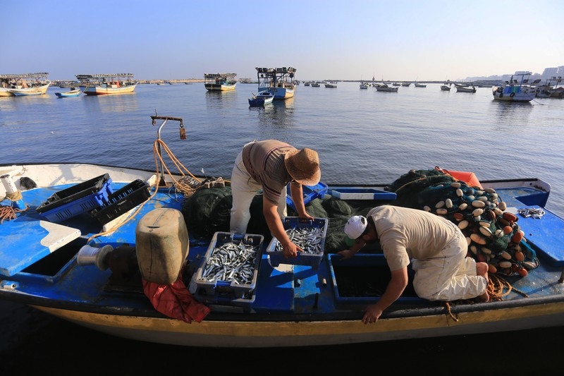 Palestinian fishermen unload boxes of fish from their boat at the seaport