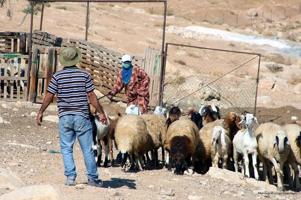 Pastore palestinese nel villaggio di Jimba a sud di Yatta vicino Hebron. [Foto: Mamoun Wazwaz/Apaimages]