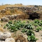 SUD DI HEBRON. La tradizione in campo