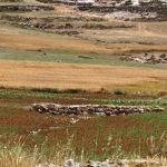 AGRICOLTURA. Cisgiordania, il lavoro collettivo contro la frammentazione