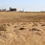SUD DI HEBRON. Sovranità alimentare tre anni dopo
