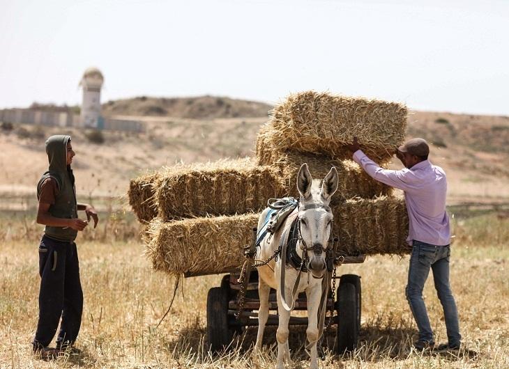 Contadini gazawi al confine con Israele (Foto: Xinhua)