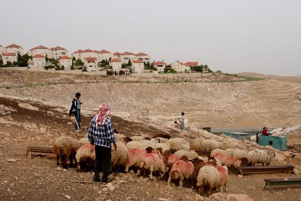 Pastori palestinesi vicino alla colonia israeliana di Ma'ale Adumim (Foto Yaniv Nadav/Flash90)