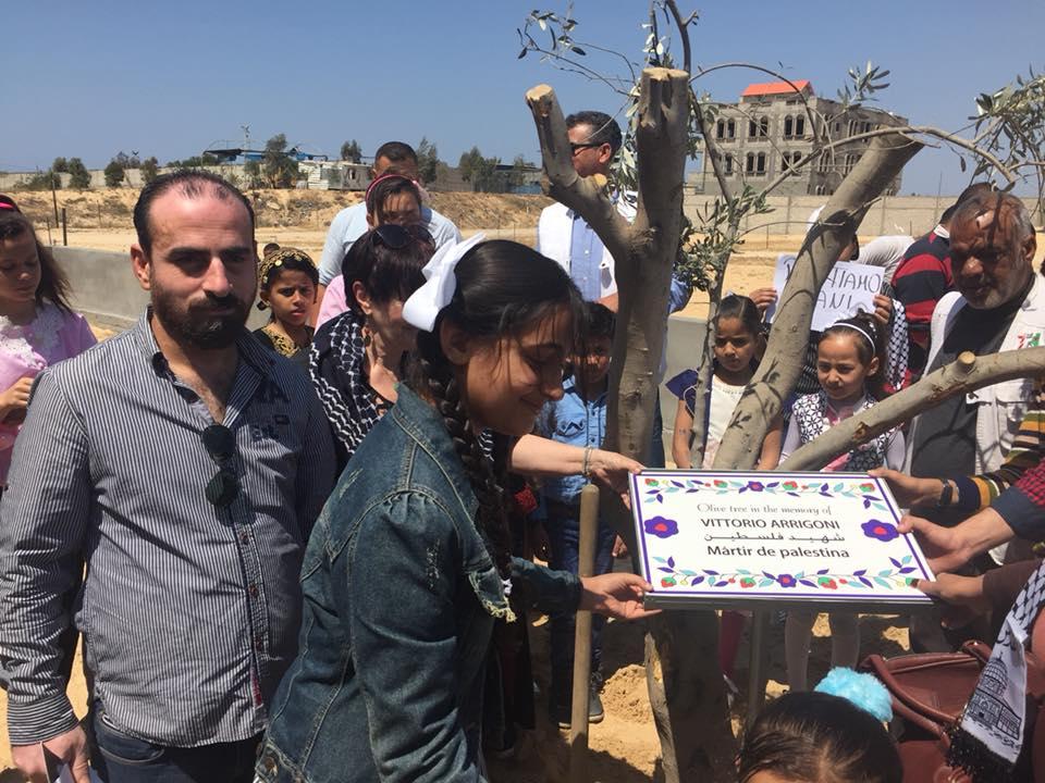 L'albero piantato a Khan Younis in onore di Vittorio Arrigoni  (Foto: Michele Giorgio/Nena News)