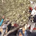 """PALESTINA. """"Con la raccolta delle olive, ritornano gli attacchi dei coloni"""""""