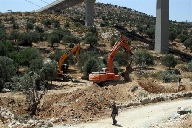 Ulivi distrutti dai bulldozer militari israeliani nel villaggio di Beit Jala  (Foto: Ma'an News)