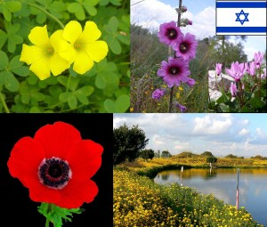 Israele fiori