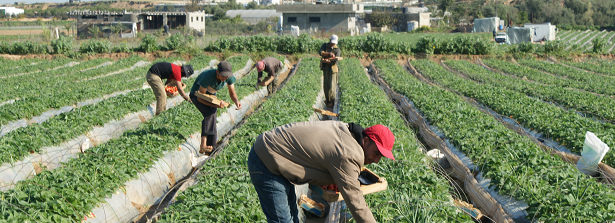 Contadini palestinesi (Foto: Wijnand Marchal)