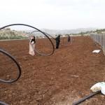 Api, erbe e oli essenziali: una rete tra Italia e Palestina