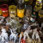 FOCUS ON AFRICA. Piante medicinali, la tradizione che aiuta la medicina moderna (Parte 1)