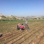 """BEE THE CHANGE. """"Cooperazione internazionale vincente dalla collaborazione tra enti locali italiani e palestinesi"""""""